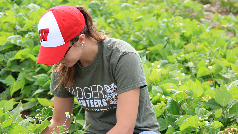 Badger Volunteers Troy Gardens